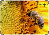 Обложка на паспорт с уголками, Пчелка