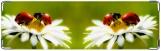 Визитница/Картхолдер, ромашка и букашка